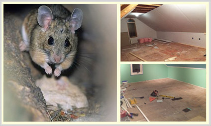 Rodent Proofing Nj Rodent Control Nj Quartz Solutions